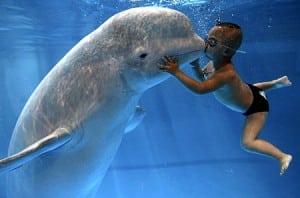 boy+kisses+beluga+whale