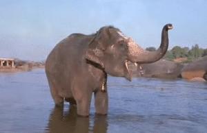 Disney Introduces Newest Baby Einstein DVD: World Animal Adventure