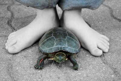 Child with their turtle