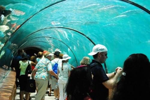 Predator Lagoon tunnel