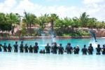 The grand finale of our Dolphin Encounter