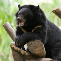 Dad Rescues Daughter From Bear Den at German Zoo