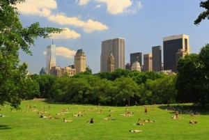 The great lawn ~ Central Park