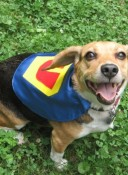 Babypop Designs - Superhero Pet Capes
