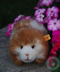 Dalle the guinea pig - Steiff