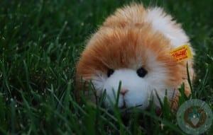 Dalle the guinea pig Steiff