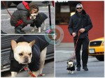 Hugh Jackman with his daughter Ava and French Bulldog Pup Peaches