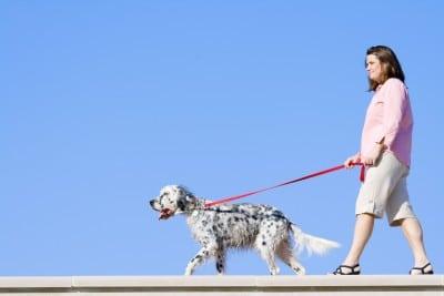 pregnant walking dog
