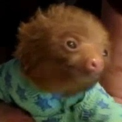 Cute 'Pajama' Bandages save Baby Sloths from Skin Infection