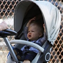 Martha Stewart Strolls With Jude in NYC!