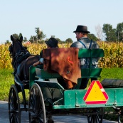 Allergy and Asthma Rates among Amish Children Low Compared to Average Population
