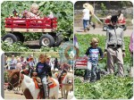 gwen stefani, Kingston Rossdale, Zuma Rossdale at Underwood Family Farm