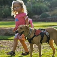 Dog Serves as a Lifeline for a Diabetic 3-Year-Old