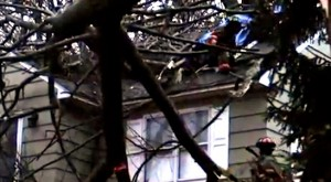 Firefighters fix house after tree falls through second floor