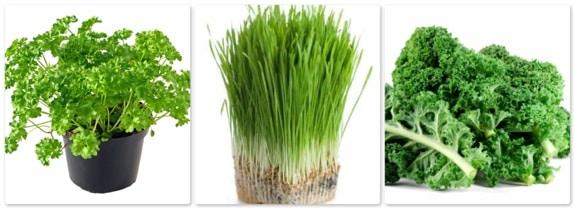 parsley, wheatgrass, kale
