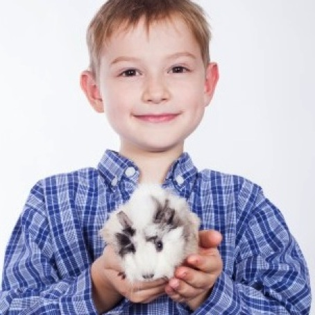 Autistic Children Show Improved Social Interaction and Behaviors When Animals are Present