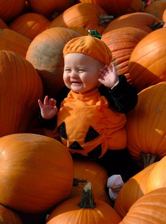 Ella Pumpkin Feldes 2
