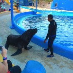 Sea Lion show Aquaventuras Park in Puerto Vallarta