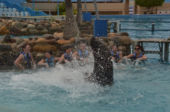 Sea lion experience Aquaventuras Park in Puerto Vallarta