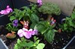 Create A Fairy Garden With Creative Roots DIY Kit