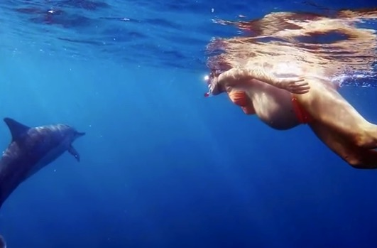 Pregnant Dorina Rosin swims with dolphins