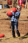 Gwen Stefani's son Zuma Rossdale at Shawn's pumpkin patch