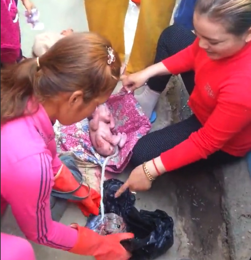 Newborn Baby Discarded In Garbage Bag Discovered Alive By
