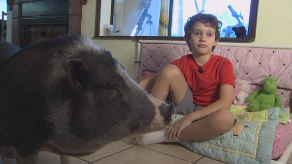 Julian with therapy pig Maggie