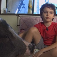Judge Rules That Child with Asperger's Syndrome Can Keep Therapy Pig