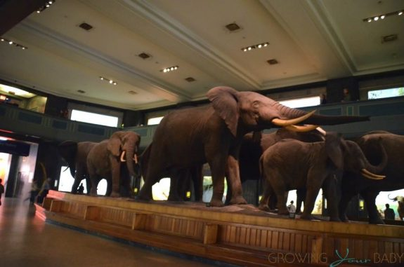 American Museum Of Natural History - Akeley Hall of African Mammals