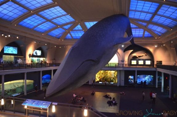 American Museum Of Natural History - Milstein Family Hall of Ocean Life