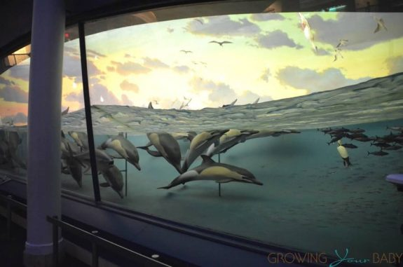 American Museum Of Natural History - Milstein Family Hall of Ocean Life dolphins