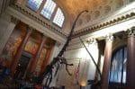 American Museum Of Natural History - Theodore Rosevelt Rotunda