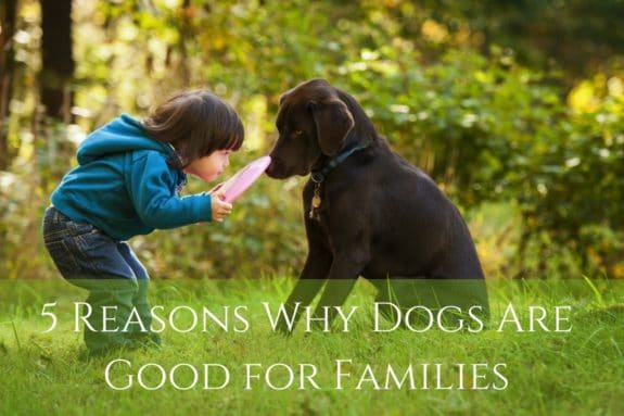 5 Reasons Why Dogs Are Good for Families