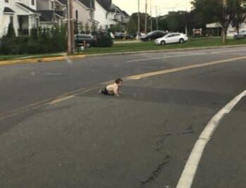 baby crawling across Joe Parker Road in Lakewood