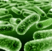 Preliminary Study Finds Probiotics during Pregnancy may Lower Risk of Allergy in Kids
