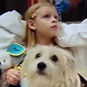 Rescue Dog Helps Monitor Young Owner during Surgery