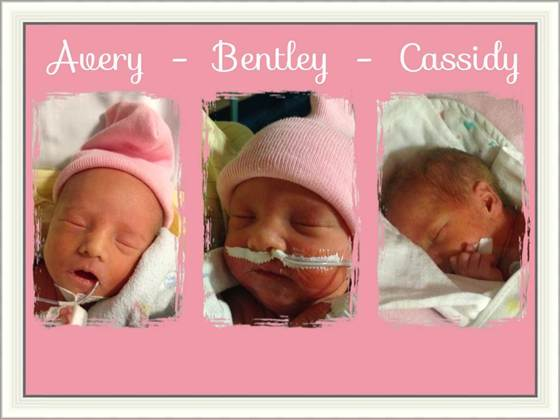 Avery. Bentley and Cassidy doss