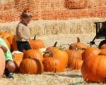 Haven Warren at Mr. Bones Pumpkin Patch