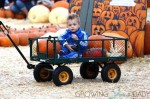 Julian Thicke in the wagon at Mr. Bones Pumpkin Patch