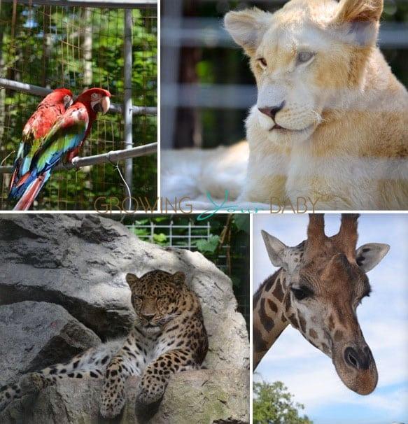 Safari Niagara wildlife