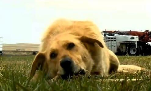 trusty dog cooper